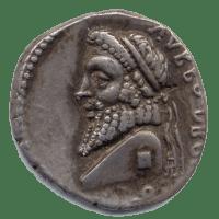 Cane Maremma roma varrone