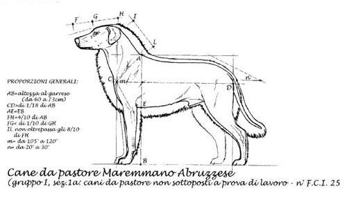cane-da-pastore-maremmano-abruzzese